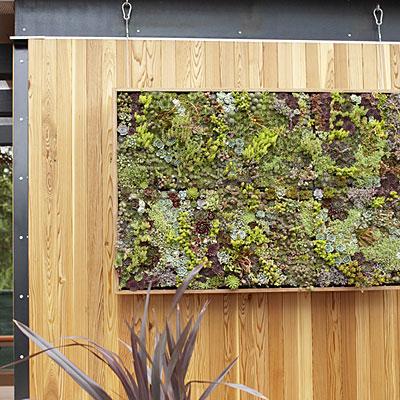 Succulent-art-l