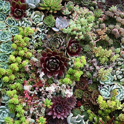Mod-cot-vert-garden-detail-l